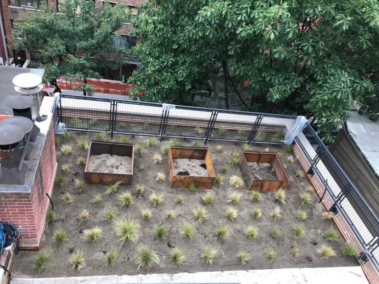 King Street - Brooklyn Sedum Green Roof - Highview Creations