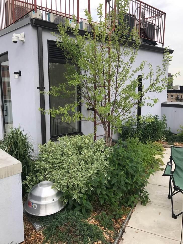 555 Graham - Brooklyn Eco Green Roof Design - Highview Creations