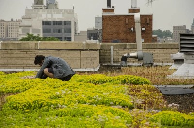 Highview-Bishop-Loughlin-Green-Roof-NYC1
