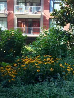 Highview Creations-101 Bedford-Green Roofs NYC 3
