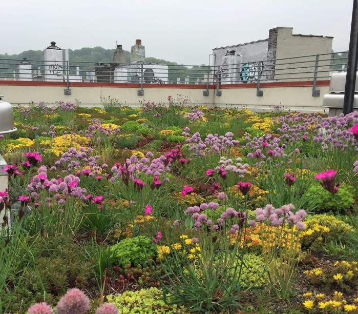 Highview Creations-552 Academy-Green Roof NYC 12