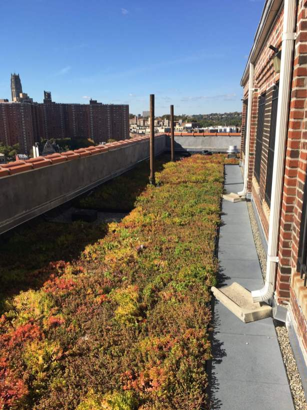 Highview Creations-Green Roof NYC-1