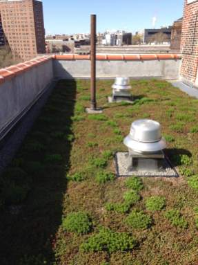 Highview Creations-Green Roof NYC-17