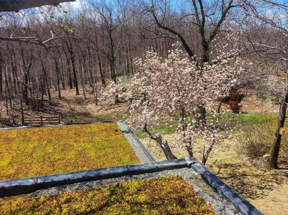 Highview Creations-Green Roof-NYC-8