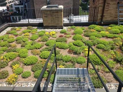 Highview Creations-Lenox Hill Green Roof-NYC-5