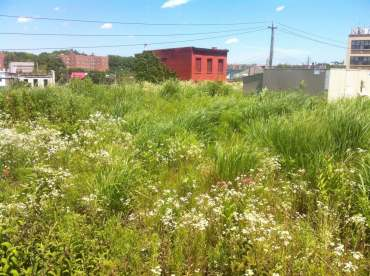 Highview Creations-Linda Tool Green Roof - NYC 11