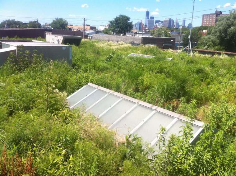 Highview Creations-Linda Tool Green Roof - NYC 6