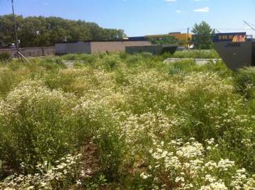 Highview Creations-Linda Tool Green Roof - NYC 9