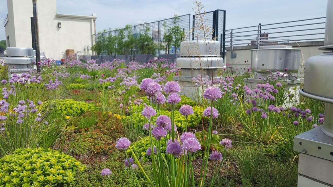 Highview Creations_green roof_nyc_1