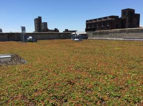 Bishop Loughlin Memorial High School - Brooklyn Green Roof - Highview Creations