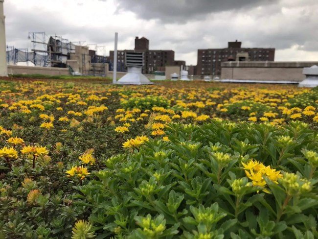 Bishop Loughlin Memorial High School - Brooklyn Green Roof - Highview Creations