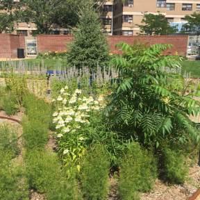 Maujer Courtyard - Brooklyn Extensive Green Roof - Highview Creations