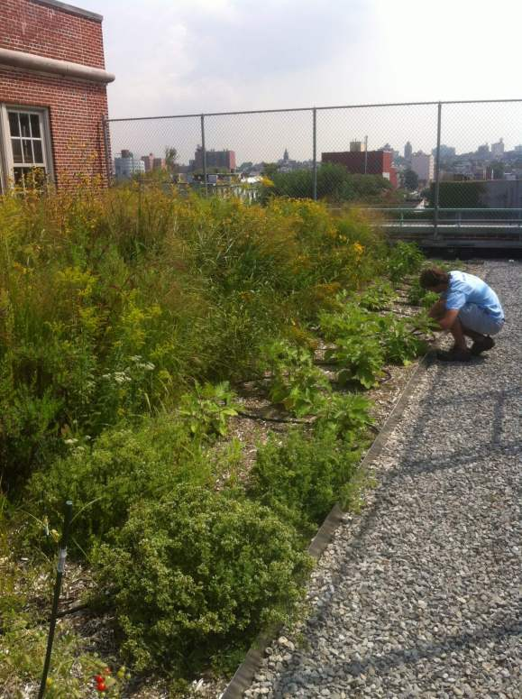 MS 442 - NYC Green Roof Design - Highview Creations