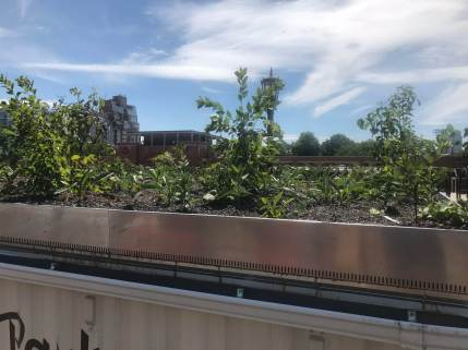 Highview-Green Roof NYC