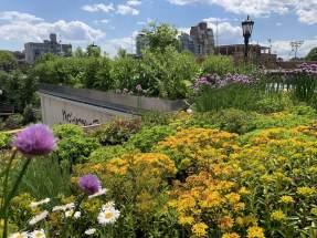 highview creations_demo garden_green roof