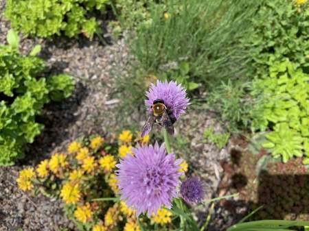 highview creations_demo garden_green roof2