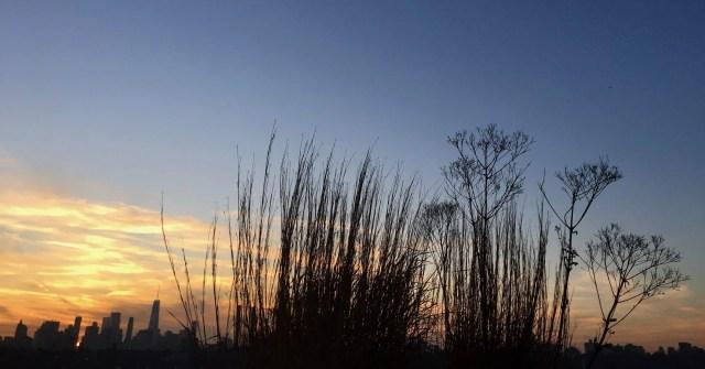 Little bluestem and Joe pye weeds against a winter sky
