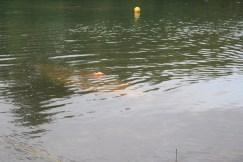 Dive Drill June 2019 325