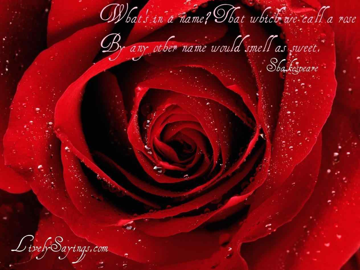 red rose symbol of