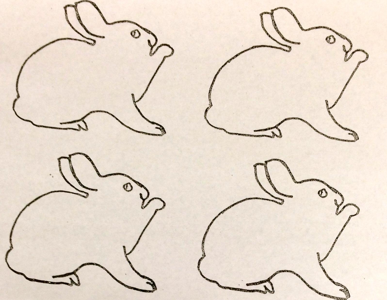 White Rabbits Magic Colors