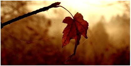 Just A Leaf Blowing In The Wind Books Blogs And Butterflies