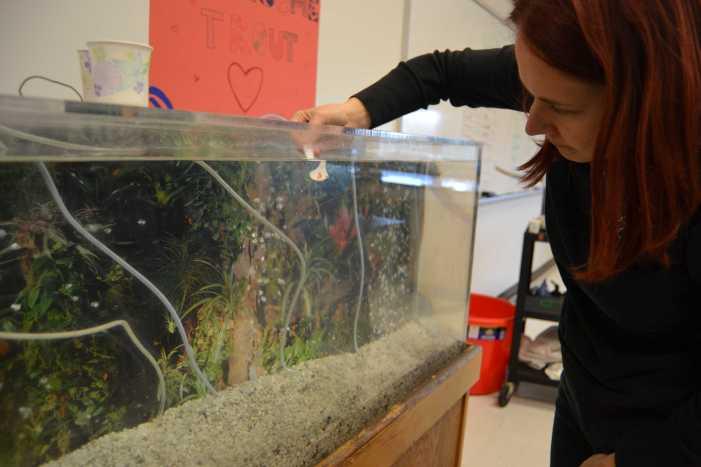 Club combats trout depopulation