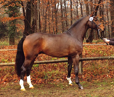 Hw Farm Proudly Presents Some Information About Stallion