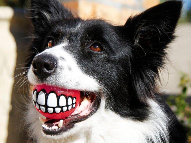 Rogz manufactures a range of pet toys.