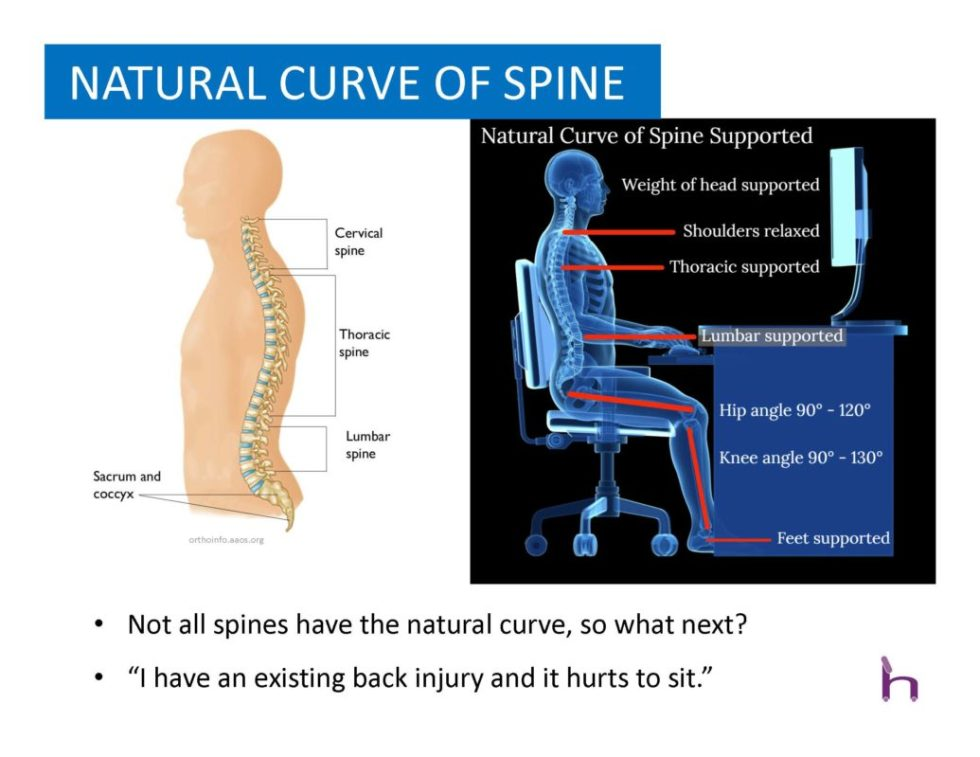 Natural Curve of Spine in Office Chair by Harris WorkSystems - Oregon - Portland