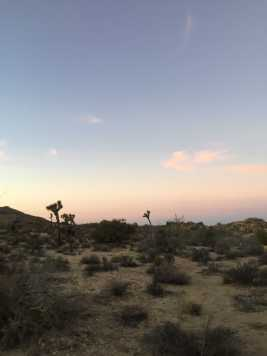 The scenery on the camp grounds of Joshua Tree. Credit: Laura Kors '21 / SPECTRUM