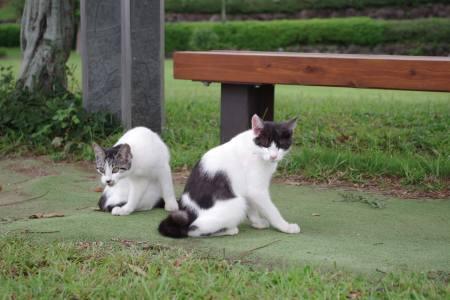 幸福のまねき猫『尾曲がり猫ちゃん』