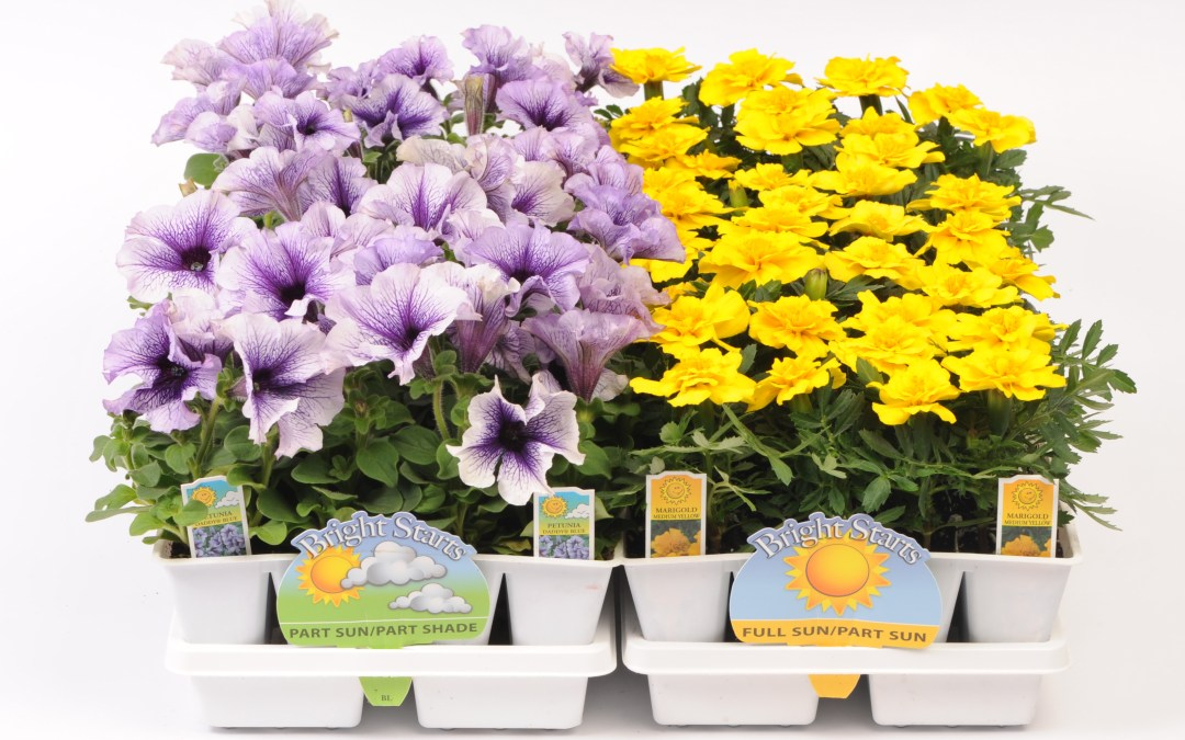606 Jumbo Bedding Plants
