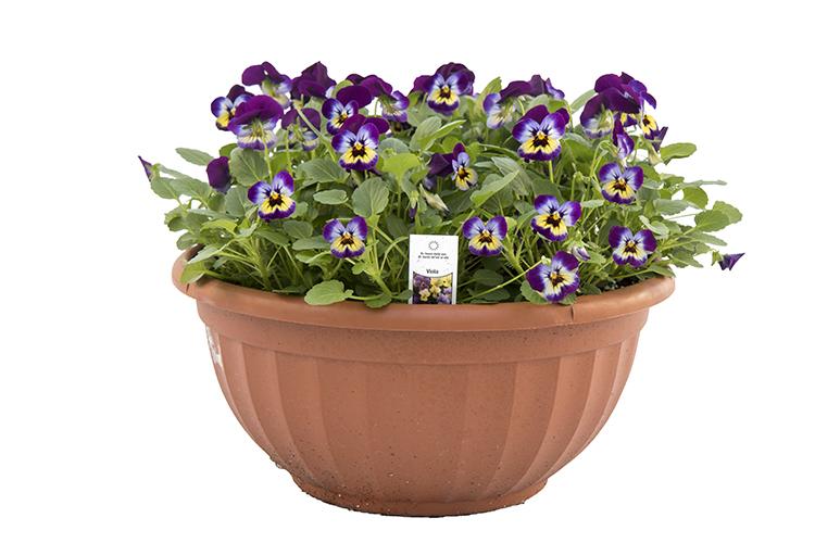 12″ Annual Color Bowl