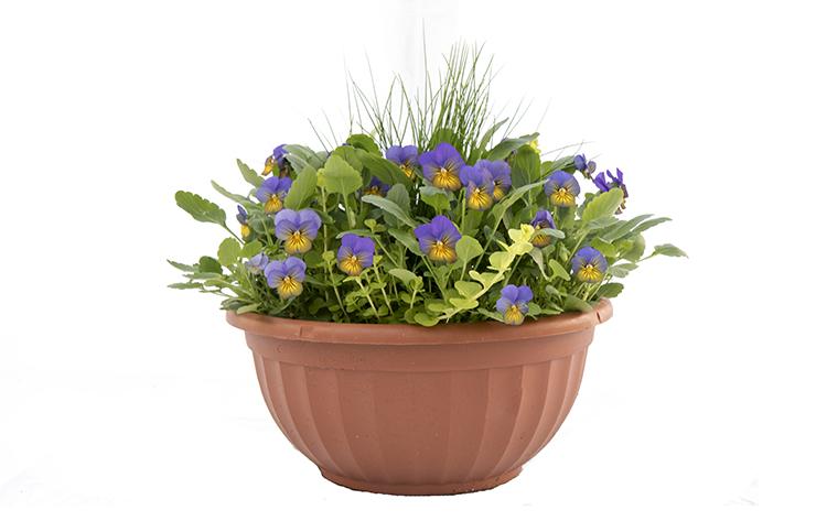 12″ Fancy Color Bowl