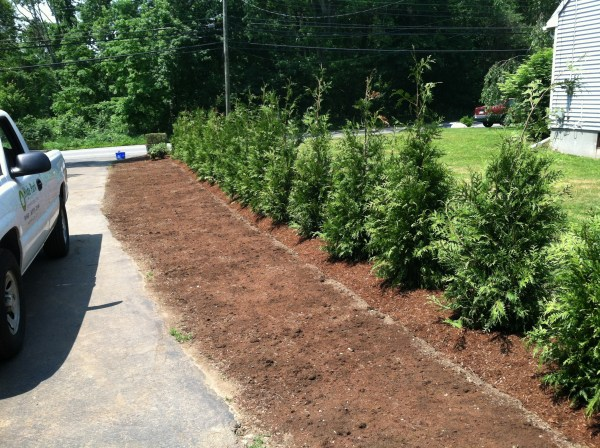 landscape buffer and screen plantings