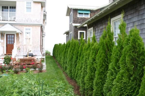 landscape buffer screen plantings