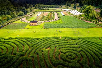 Hydrangea Ranch Wedding Venue