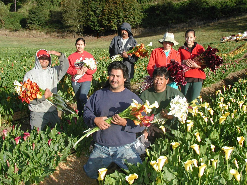 OCF ships flowers to all 50 states as well as London, Hong Kong, and India.  Collaborates with South American growers with trip to Colombia & Equador.