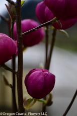 black magnolia (1 of 10)
