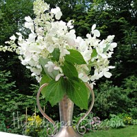Hydrangeas With Cone-Shaped Flowers