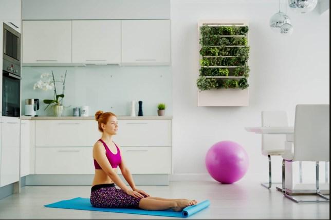 Smart Indoor Garden Yoga