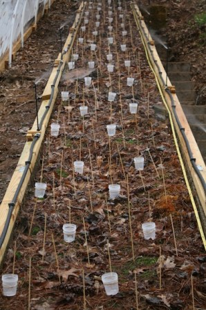 A grid of cups set out on the model give an accurate, high-resolution estimate of water input to the soil model.