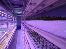 水素水利用の水耕栽培システム