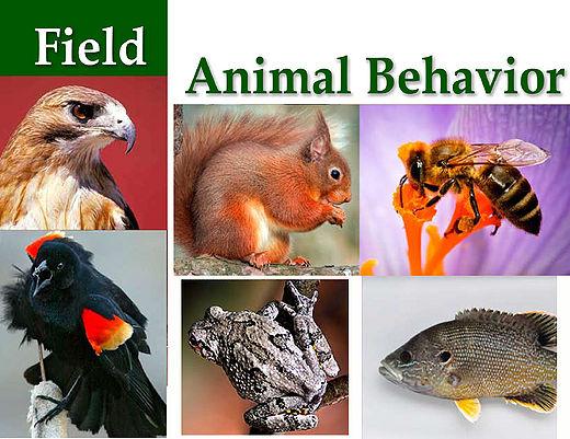 Field Animal Behavior EEBedia