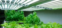fluorescent grow light bulbs - Hydroponics Base