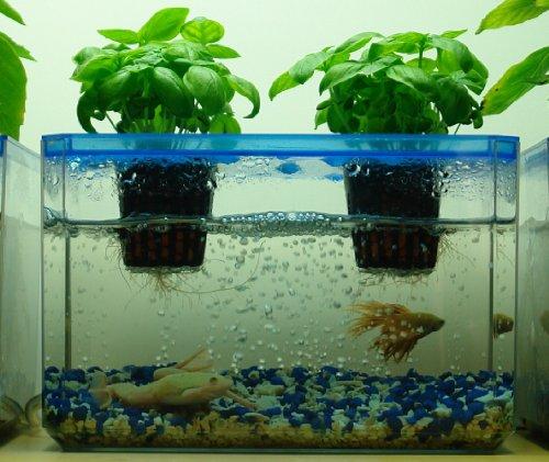 Jrponics fishgarden bubblegarden aquaponics for Hydroponic aquarium with fish