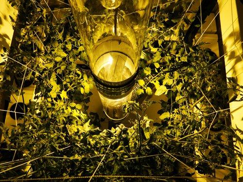 Supercloset Bigbuddhabox 1000watt Hydroponic Grow Tent System & Supercloset Bigbuddhabox 1000watt Hydroponic Grow Tent System ...