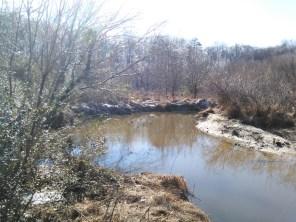 pond_42