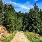 cesta od jezírka