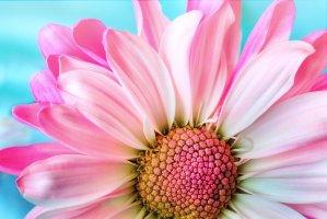 flower, nature, flora